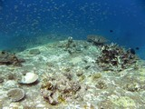 Similan462_TurtleIslandDive
