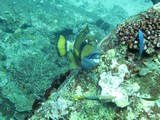 Similan469_TurtleIslandDive
