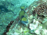 Similan471_TurtleIslandDive