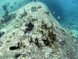 Similan473_TurtleIslandDive