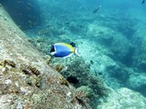 Similan474_TurtleIslandDive