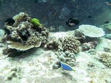 Similan479_TurtleIslandDive