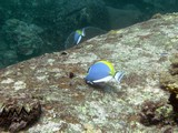 Similan500_TurtleIslandDive