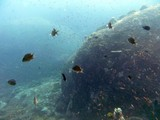 Similan509_TurtleIslandDive