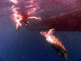 Similan518_TurtleIslandDive
