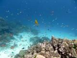 Similan526_CoralGardenDive