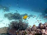 Similan528_CoralGardenDive