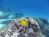 Similan539_CoralGardenDive