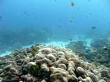 Similan545_CoralGardenDive
