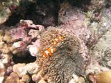 Similan571_CoralGardenDive