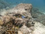 Similan584_CoralGardenDive