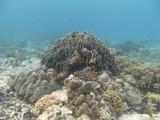 Similan586_CoralGardenDive