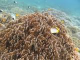 Similan592_CoralGardenDive