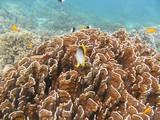 Similan593_CoralGardenDive