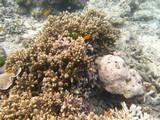 Similan600_CoralGardenDive