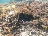 Similan609_CoralGardenDive