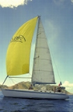 Admiring the Spinaker sail (3)