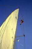 Climbing the sail (2)