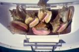 Snorkeling loot