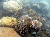 KohTao364_SnorkelingUW