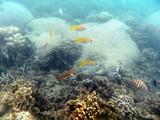 KohTao365_SnorkelingUW