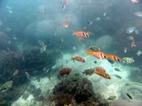 KohTao367_SnorkelingUW