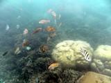 KohTao369_SnorkelingUW