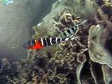 KohTao377_SnorkelingUW