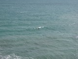 Samui526_LongSwim