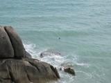 Samui568_LongSwim