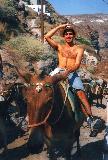 santorini: donkey