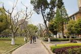 Shanghai767_Tongji
