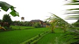 Ubud0062_RiceFields_AyungRiver