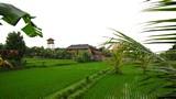 Ubud0062_RiceFields_AyungRiver