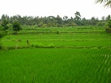 Ubud0075_RiceFields_AyungRiver