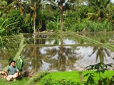 Ubud0104_RiceFields_Pertiwi