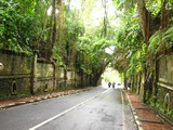 Ubud0111_MonkeyForest