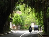 Ubud0112_MonkeyForest