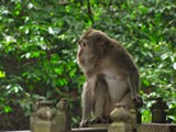 Ubud0118_MonkeyForest