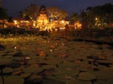 Ubud0305_LotusByNight
