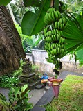Ubud0465_Pertiwi_Blessings