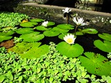 Ubud0548_Pertiwi_AbovePool