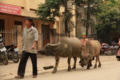 Vietnam0241_BacHa_MainStreet