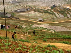 Vietnam2740_LaoChai_WorkingFields