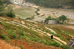 Vietnam2744_LaoChai_WorkingFields