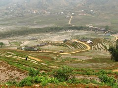 Vietnam2749_LaoChai_WorkingFields