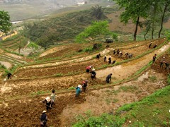 Vietnam2754_LaoChai_WorkingFields