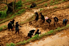 Vietnam2758_LaoChai_WorkingFields