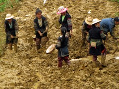 Vietnam2762_LaoChai_WorkingFields