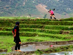 Vietnam2812_LaoChai_WorkingFields